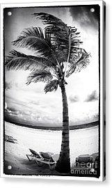 Windy Palm Acrylic Print by John Rizzuto