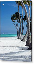 Windy Paradise Acrylic Print by Sophie Vigneault