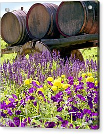 Wine Barrels At V. Sattui Napa Valley Acrylic Print by Michelle Wiarda