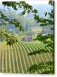 Acrylic Print featuring the photograph Wine Country by Debra Kaye McKrill