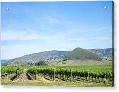Acrylic Print featuring the photograph Wine Country Edna Valley by Priya Ghose