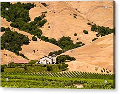Wine Country Acrylic Print