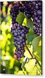Wine Grapes Acrylic Print by Scott Pellegrin