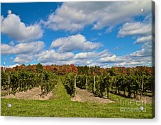Wine In Waiting Acrylic Print by William Norton