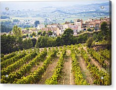 Winemaking In The Largest Wine Region Acrylic Print