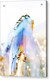 Wing Dream Acrylic Print