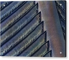 Wing Feather Detail Of Swallow Sem Acrylic Print by Science Photo Library