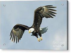 Wing Flare Acrylic Print by John Blumenkamp