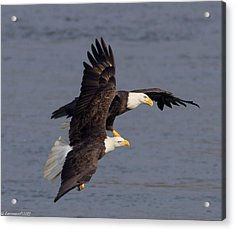 Wing Space  Acrylic Print by Glenn Lawrence