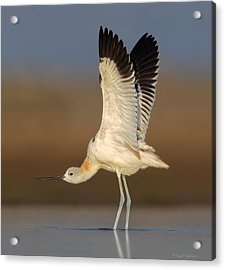 Acrylic Print featuring the photograph Wing Stretch by Daniel Behm