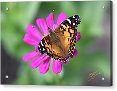 Winged Beauty Acrylic Print