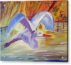 Winged Creation Acrylic Print