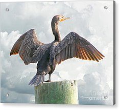 Acrylic Print featuring the photograph Winging It by Mariarosa Rockefeller