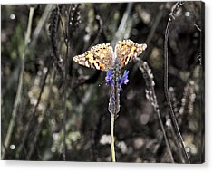 Acrylic Print featuring the photograph Wings From Heaven by Meir Ezrachi