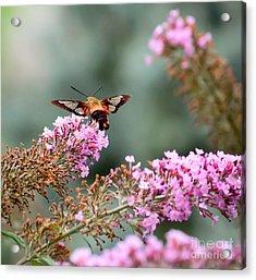 Wings In The Flowers Acrylic Print by Kerri Farley