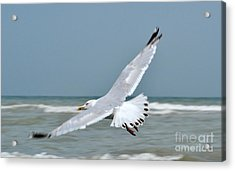 Acrylic Print featuring the photograph Wings Of Freedom by Simona Ghidini