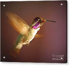 Wings Of Gold Acrylic Print