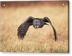 Acrylic Print featuring the photograph Wings Of Motion by Daniel Behm