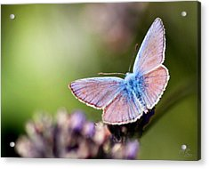 Wings Of Tenderness Acrylic Print by Martina  Rathgens