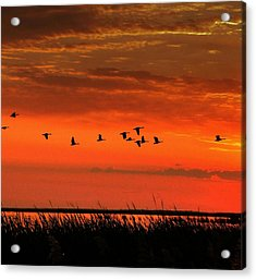 Wings On High Acrylic Print by Larry Trupp