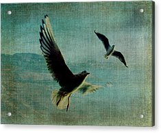 Wings Over The World Acrylic Print by Sarah Vernon