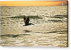 Wings Over Water Wil 270 Acrylic Print