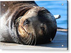 Acrylic Print featuring the photograph Wink Wink by Christy Pooschke