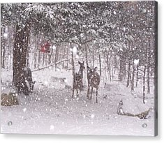 Winter 2014 Acrylic Print