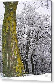 Winter  4  Acrylic Print by Vassilis Tagoudis