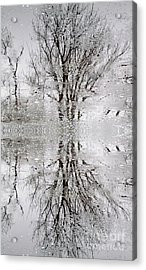 Winter Abstract Acrylic Print