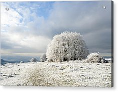 Winter Acrylic Print by Anne Gilbert