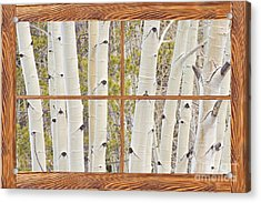 Winter Aspen Tree Forest Barn Wood Picture Window Frame View Acrylic Print