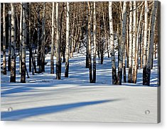 Acrylic Print featuring the photograph Winter Aspens by Jack Bell
