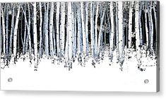 Winter Aspens  Acrylic Print by Michael Swanson