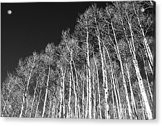 Acrylic Print featuring the photograph Winter Aspens by Roselynne Broussard