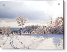 Winter At Scarborough Bluffs Acrylic Print by Elena Elisseeva