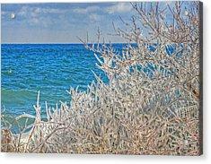 Winter Beach Acrylic Print by Michael Allen