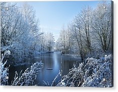 Winter Beauty Acrylic Print by Svetlana Sewell