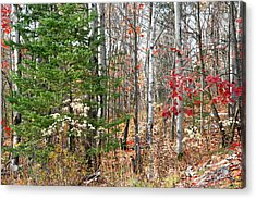 Winter Beginning Acrylic Print by Carolyn Reinhart