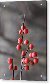 Acrylic Print featuring the photograph Winter Berries by Vadim Levin