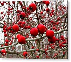 Winter Berryscape Acrylic Print