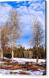 Winter Birch Acrylic Print