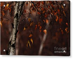 Winter Birch Acrylic Print by Linda Shafer