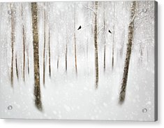 Winter Birches Acrylic Print