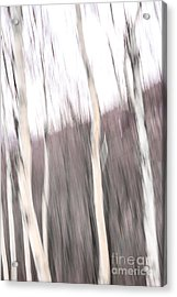 Winter Birches Tryptich 1 Acrylic Print