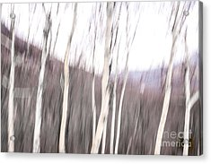 Winter Birches Tryptich 2 Acrylic Print by Susan Cole Kelly Impressions