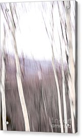 Winter Birches Tryptich 3 Acrylic Print