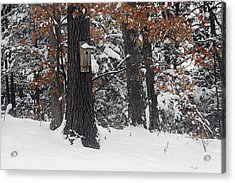 Acrylic Print featuring the photograph Winter Bird House by Wayne Meyer