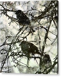 Winter Birds Acrylic Print by John Goyer