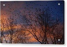 Winter Birds Acrylic Print by Utah Images